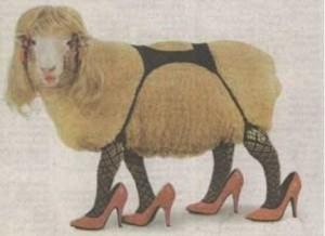 Schafnerin