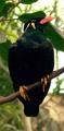 Beo (Symbolbild)